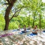 Yoga platform in forest